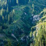 Wald Antholz