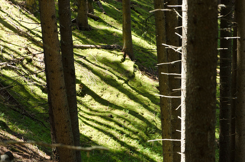 Wald im Gsiesertal