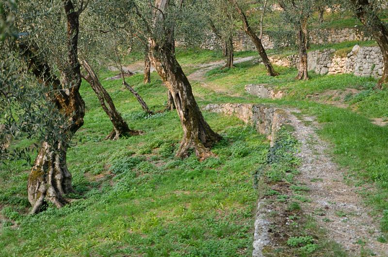 Im Olivenhain am Gardasee 01