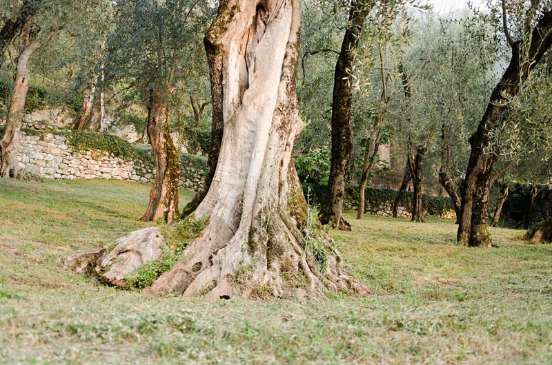 Im Olivenhain am Gardasee 05