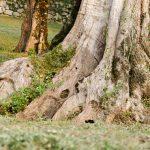 Im Olivenhain am Gardasee 06