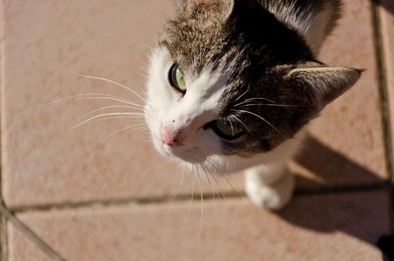 Katze 01