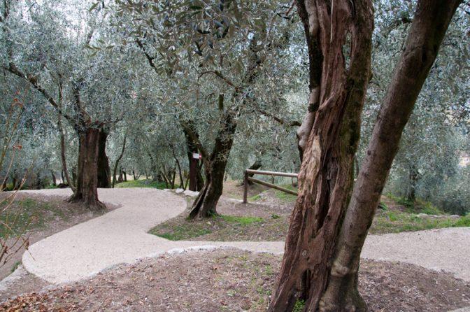 Rilke-Weg im Olivenwäldchen