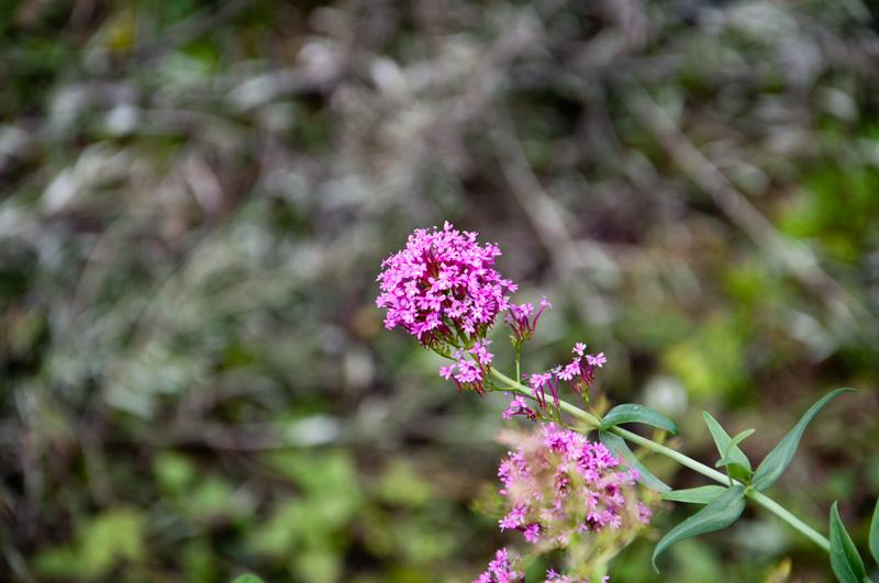 Blumengruß am Wegesrand