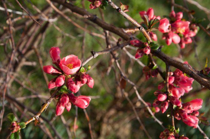 Frühling im Val di Non