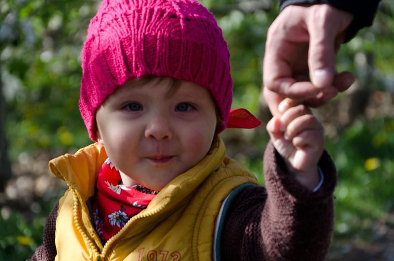 An Papis Hand gemütlich durch die Apfelwiesen spazieren.