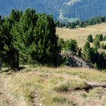Abstieg Monte Pic