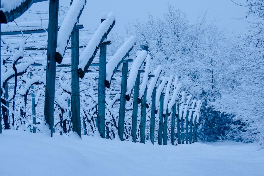 Winter in Südtirol, wandern durch eingeschneiten Reblandschaften