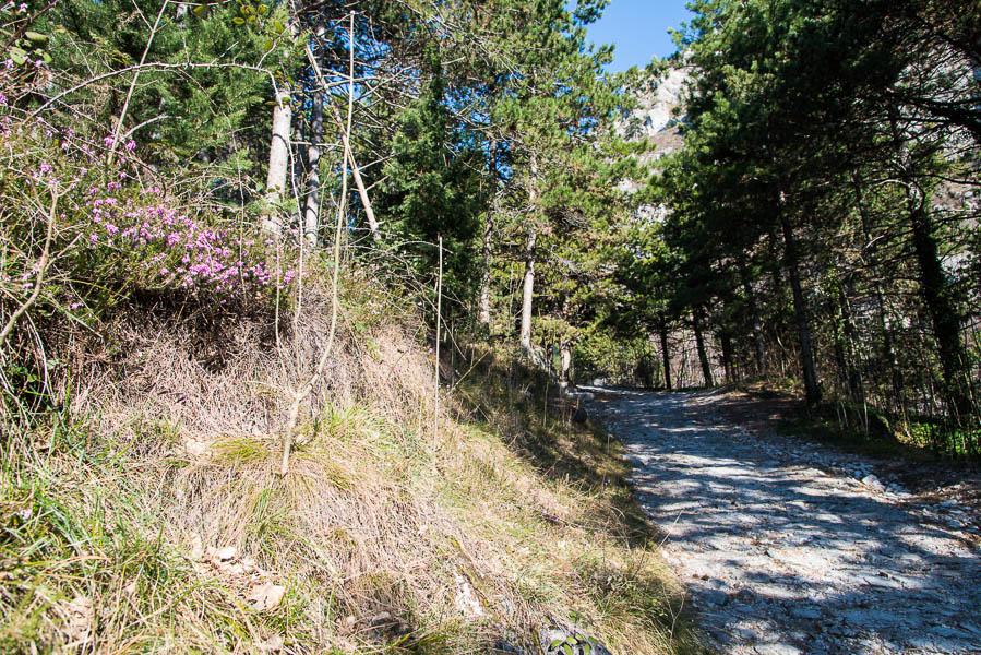 Saumpfad Limone - cima Mughera - Baita Segala