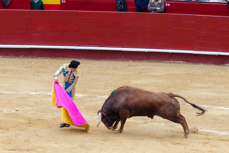 Ein stattlicher brauner Bulle kämpft um die Gunst der Zuschauer
