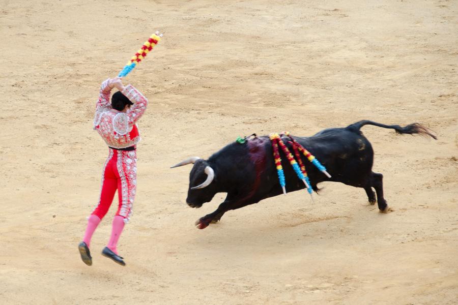 Der Banderillero sticht dem Stier die banderillas in den Rücken um ihn zu schwächen