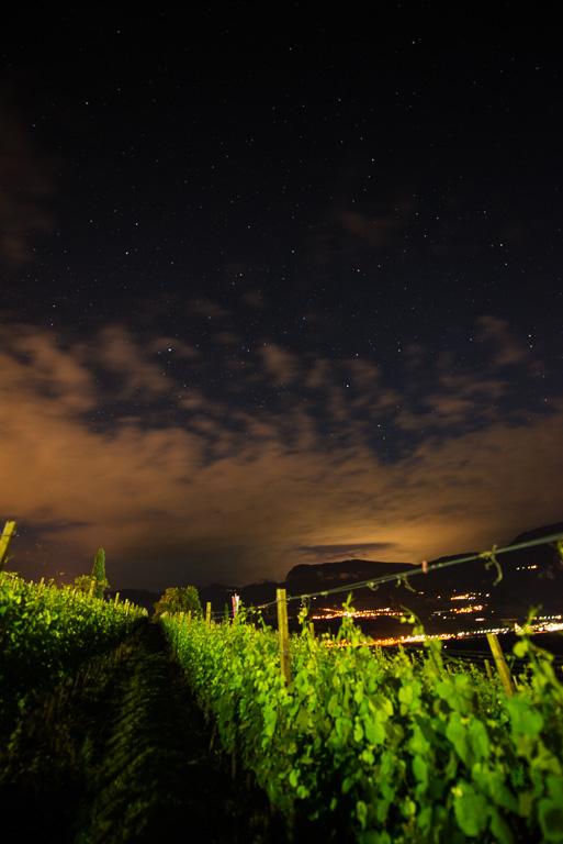 Weinberge mit Sternenhimmel