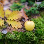 Apfel Golden Delicious und Eichenblatt