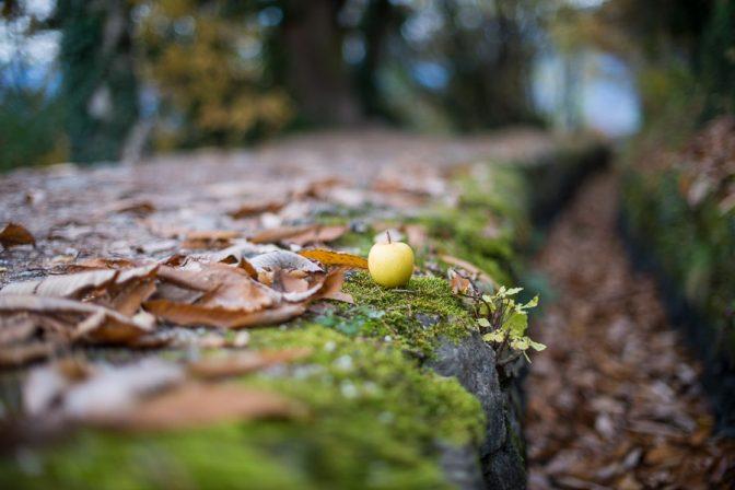 Apfel am Waalweg Marling
