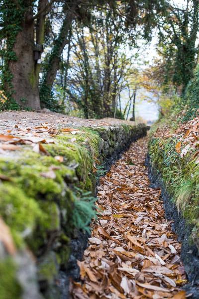 Herbst am Waalweg Marling