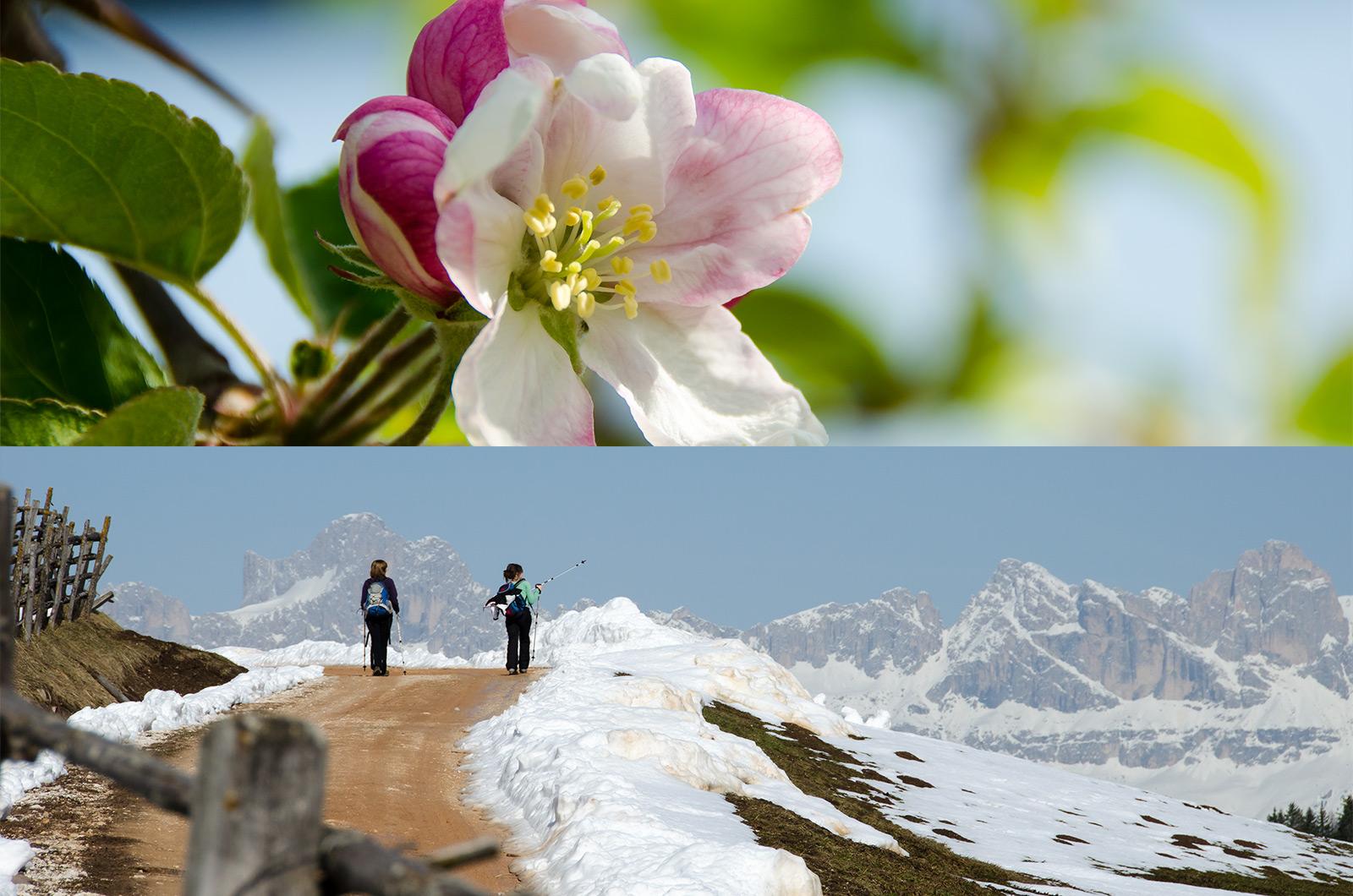Apfelbaum Blüte und Schneewandern