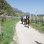 Pferde auf dem Seerundwanderweg