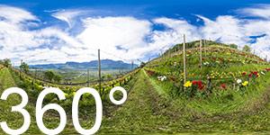 360° im Weinberg des Egetmann Obmannes. Im Frühling blühen hier unzählige Tulpen.