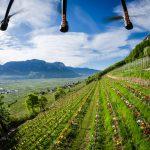 Flug Drohne: Die Tulpen am Giggerblick über Tramin