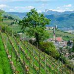 Blick auf das Weindorf Tramin im Frühling