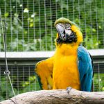 Papagei in den Gärten von Schloss Trauttmansdorff