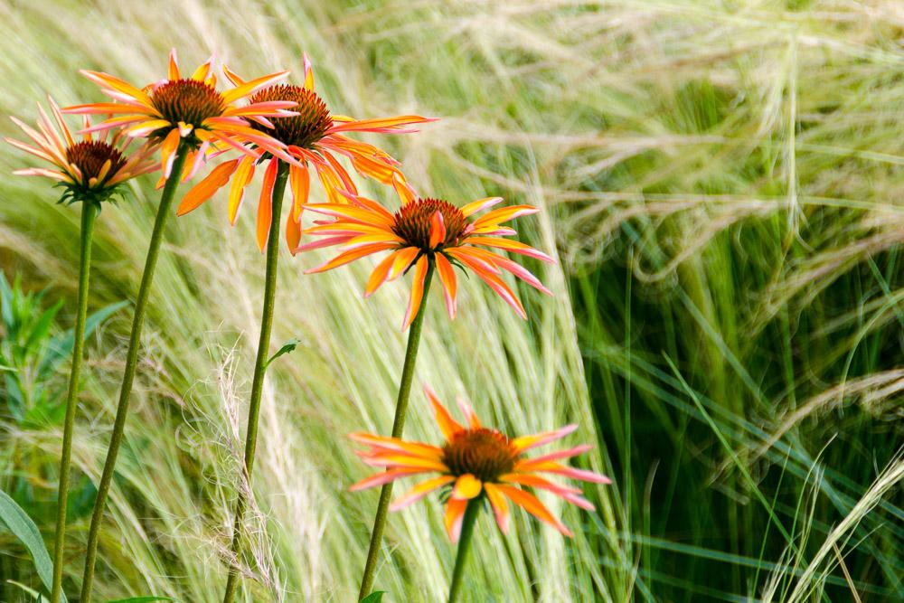 Blume in den Gärten von Schloss Trauttmansdorff