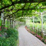 Weinlaube in den Gärten von Schloss Trauttmansdorff