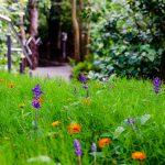 Wiese in den Gärten von Schloss Trauttmansdorff