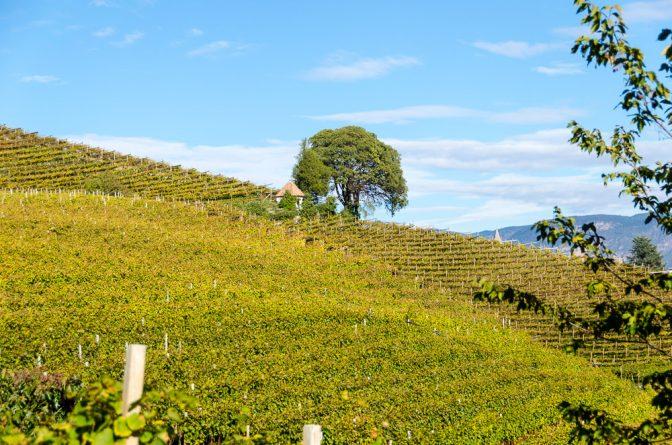 Blick vom Weinlehrpfad Kurtatsch auf die Weinberge
