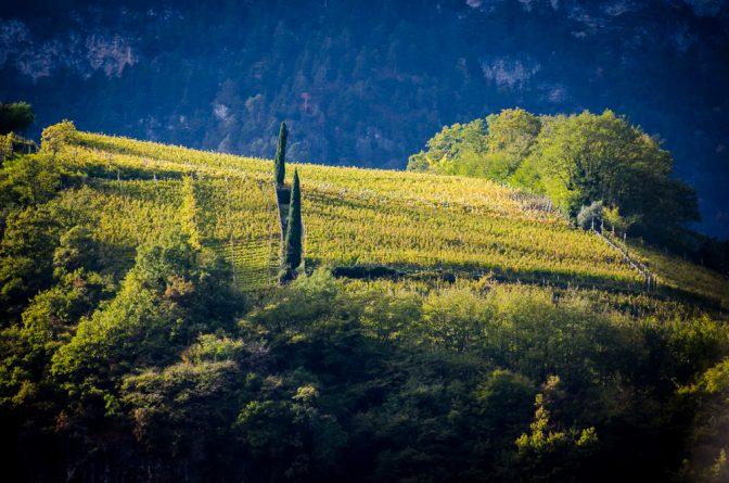 Die Weinberge über den Weinlehrpfad