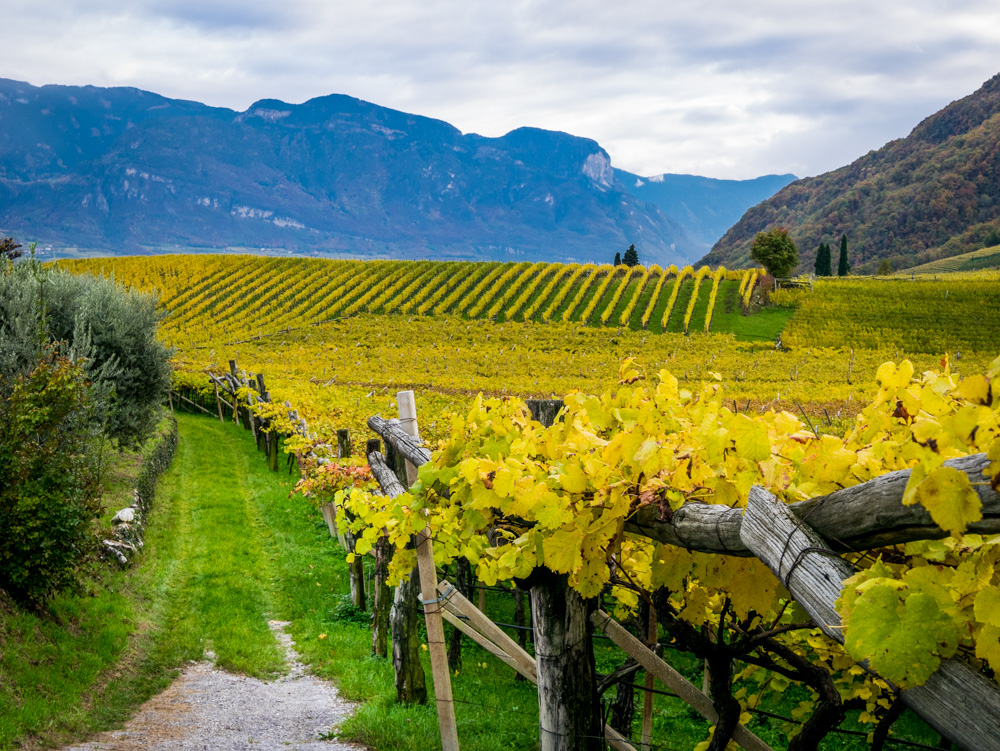 Weinberge im Bärental zwischen St. Josef am See und Kaltern