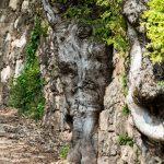 Baum in Steinmauer