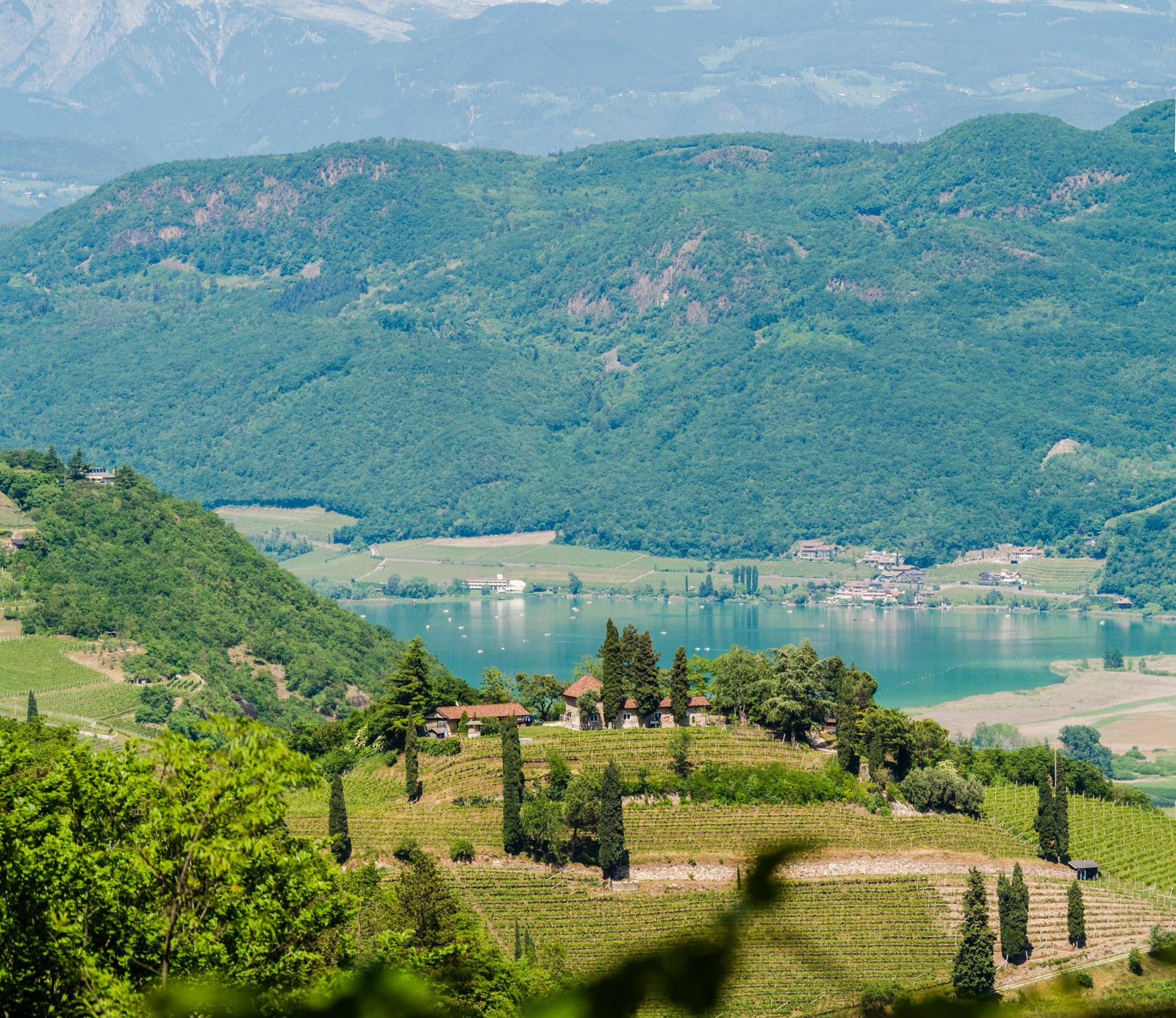 Weinberg Kastelaz mit Kalterer See