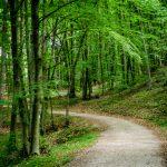 Friedensweg in Kaltern