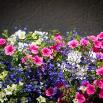 Blumen Sulfinien