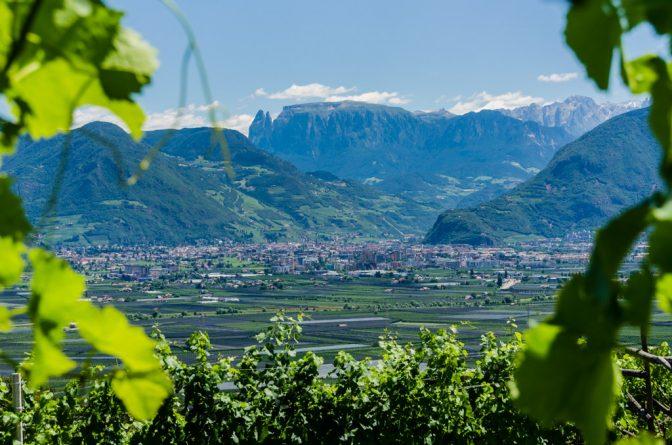 Blick durch die Weinberge Missians nach Bozen mit Schlern und Rosengarten
