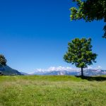 Baum auf Cisloner Alm