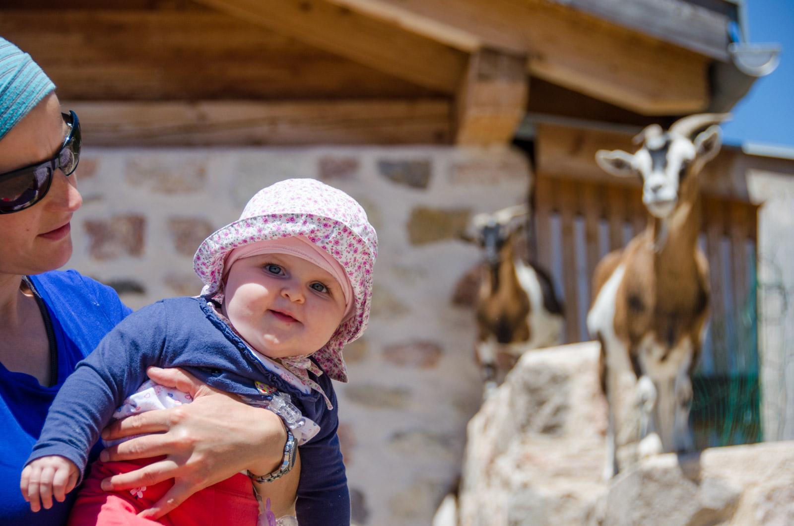 Anna und die Cisloner Ziegen