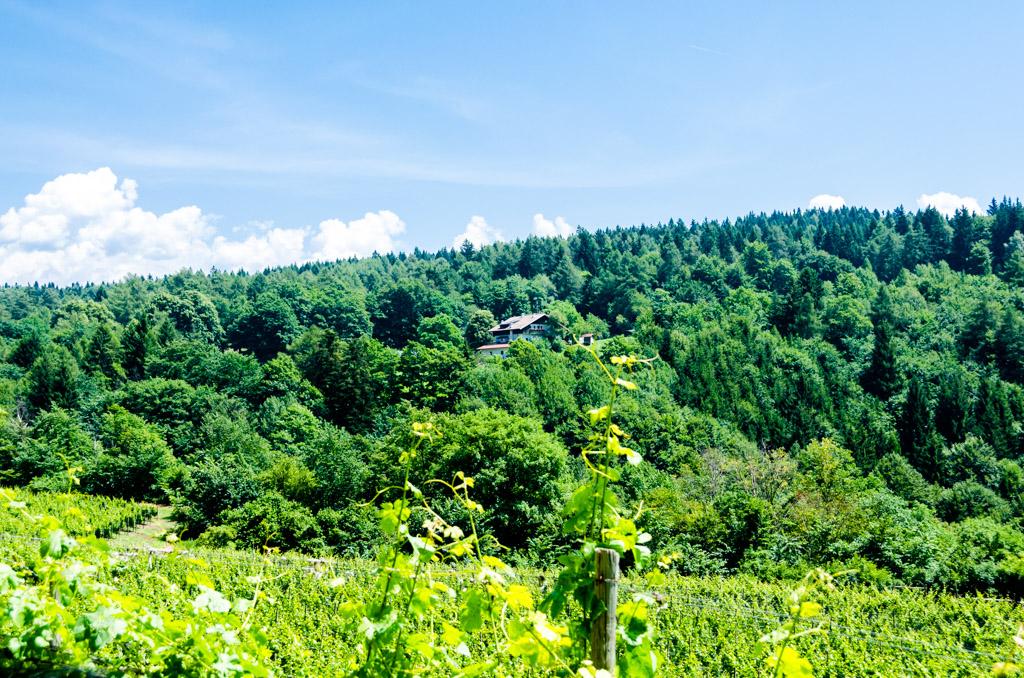 Hof in Unterfennberg