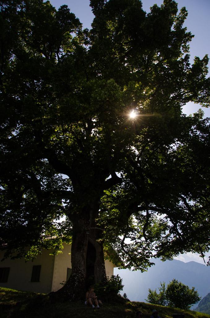 400 Jahre alte Linde in Unterfennberg