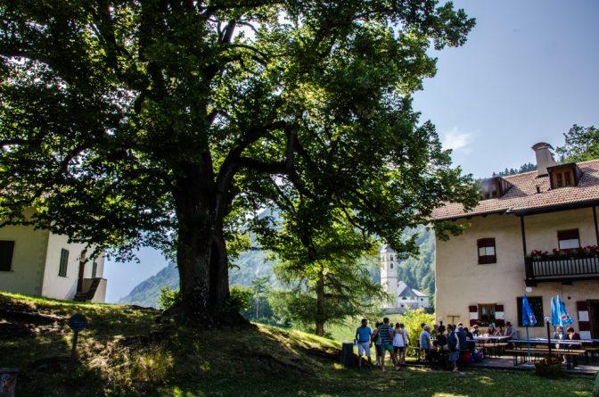 Gasthaus zur Kirche mit 400 Jahre alter Linde