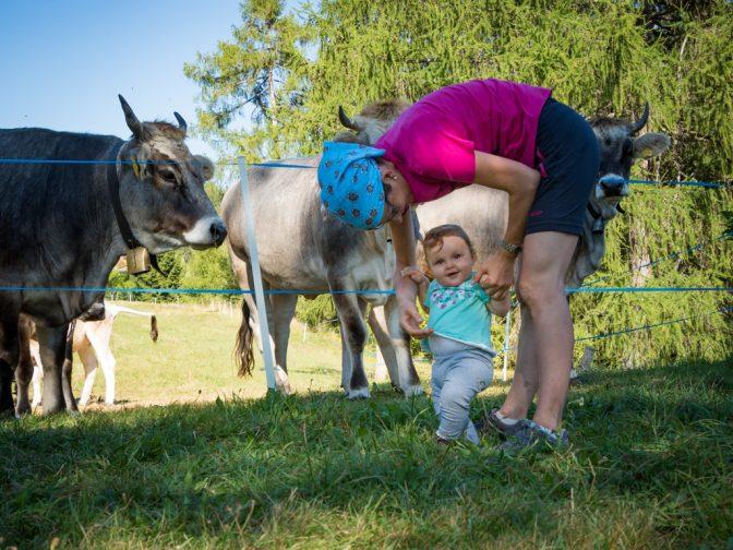 Anna und die Kühe
