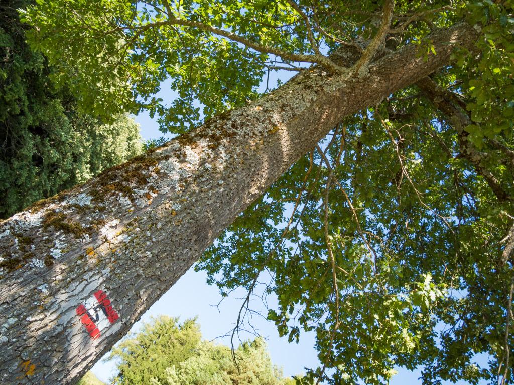 Baum, Markierung