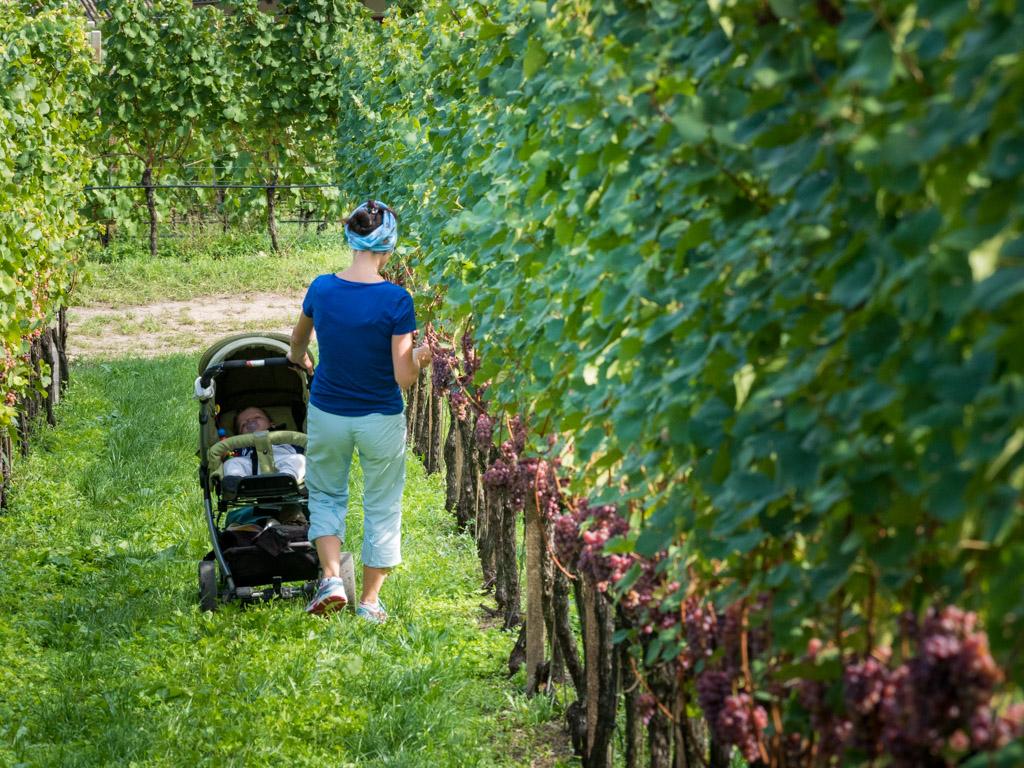 """Das Wort """"Leitn"""" bedeutet für die Südtiroler Weinbauern Weinberge in Hanglage"""