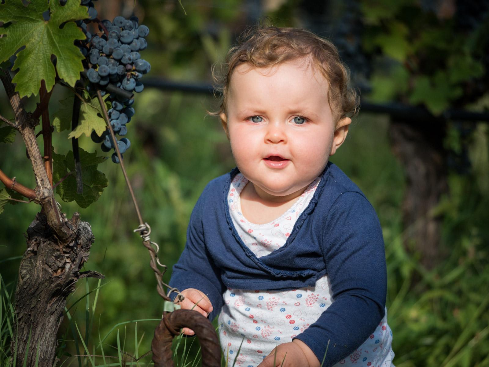 Im Weinberg bei den süßen Trauben