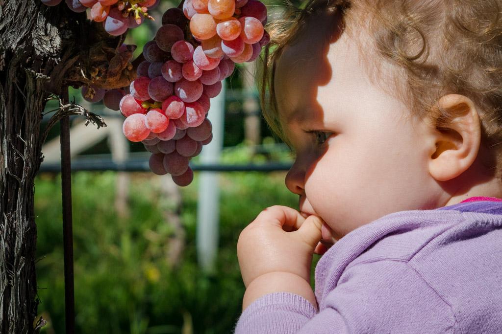 Gewürztraminer Trauben kosten