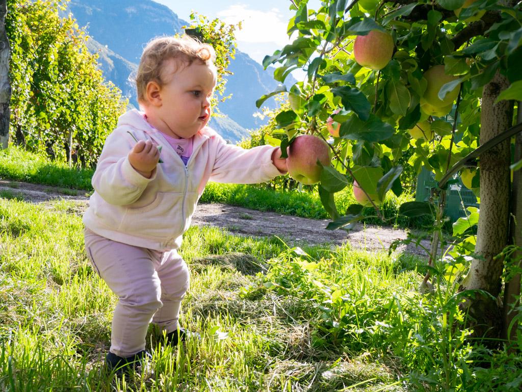 Anna beim Äpfel pflücken