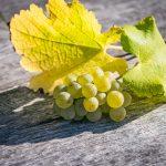 Weintraube