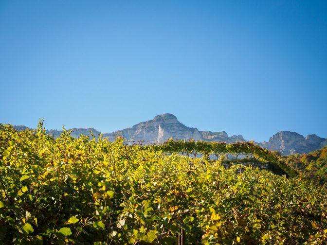 Herbstspaziergang - Herbstlicher Weinberg mit Blick auf Schwarzem Kopf