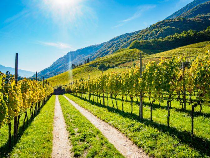 Herbstspaziergang - Herbstlicher Weinberg